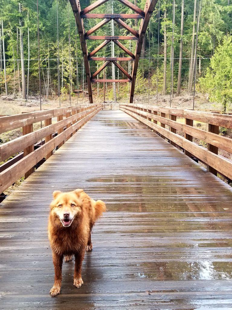 bridge over north umpqua river