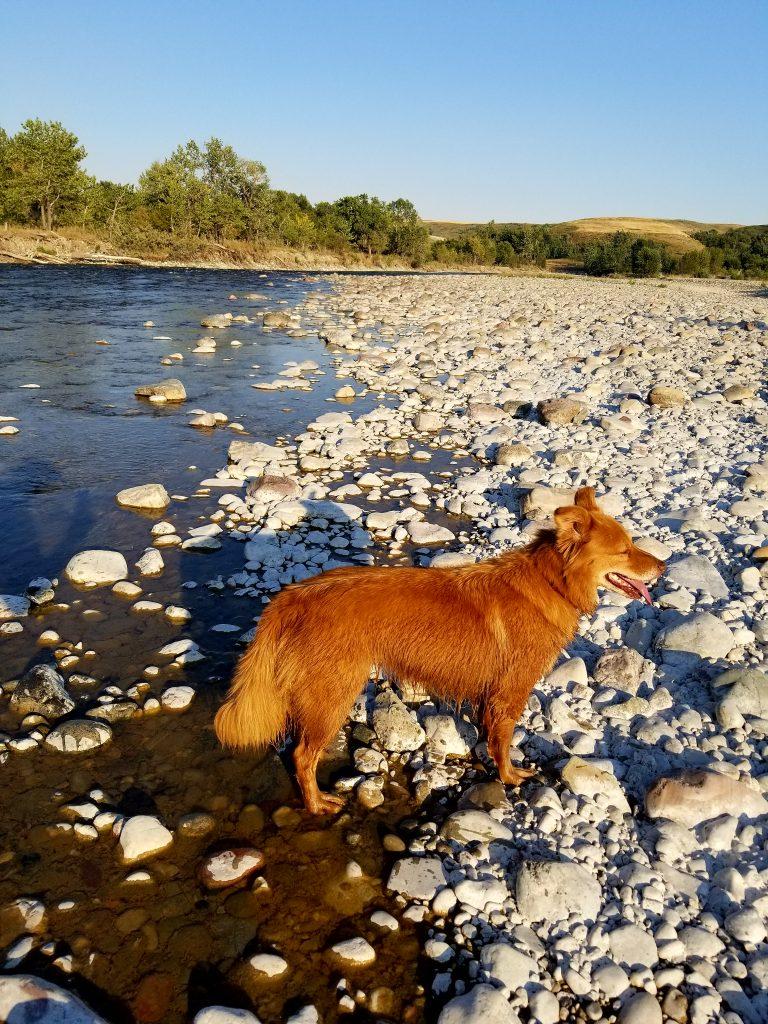 waterton river fly fishing