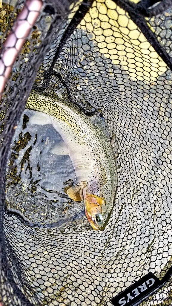 cutthroat trout fishing