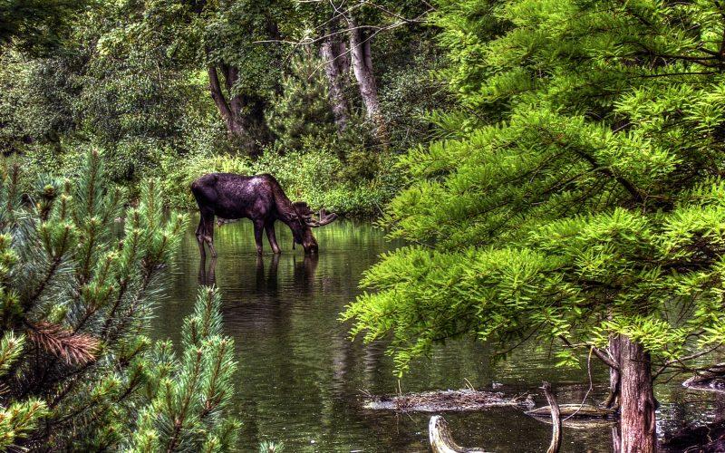 Maine hunting regulations