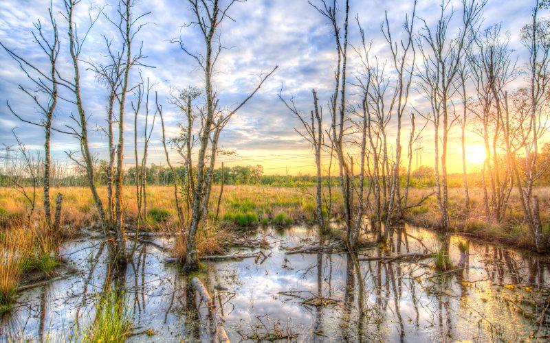 Mississippi hunting regulations