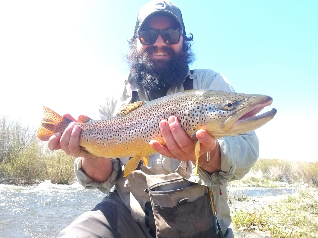 montana brown trout fly fishing