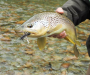 Fly Fishing Book Giveaway: Grab Your Free Copy