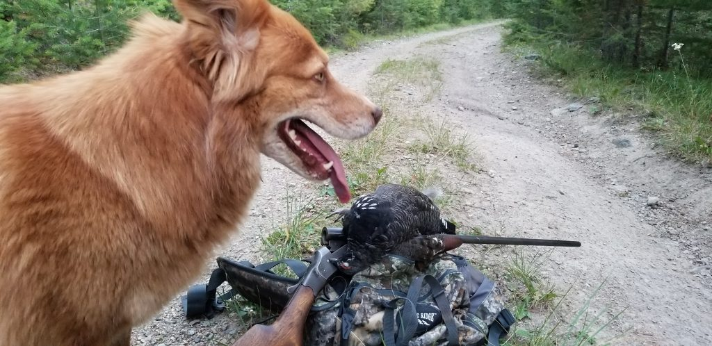 montana grouse hunting