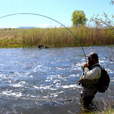 fly fishing for trout